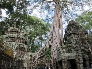 Big trees invade Ta Prohm
