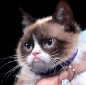 grumpy_cat_by_gage_skidmore-crop
