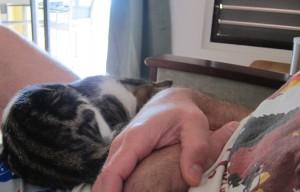 Visiting kitty, Antigua 1b