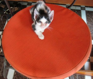 A Small Cat, Vietnam