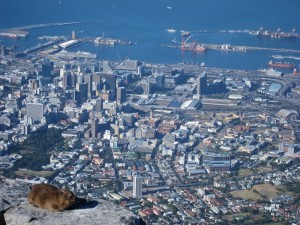 A dassie atop Table Mountain